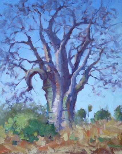 Baobab Study, Mazabuka 8X10in