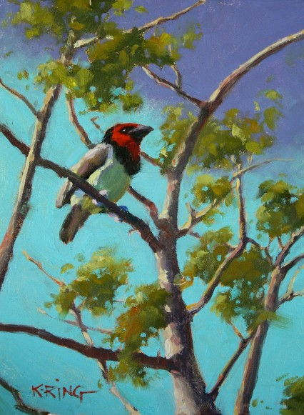 Black Collared Barbet 6x8in