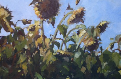 Drying Sunflowers, Lucca, 20x30cm
