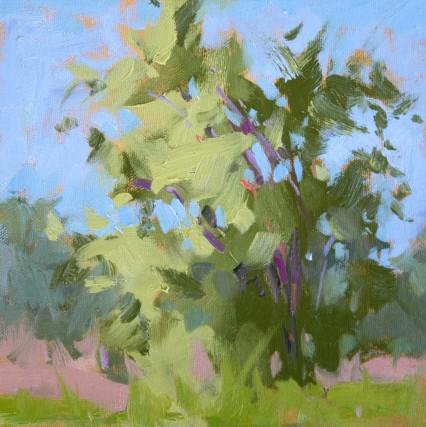 Tanderra trees study 8x8in
