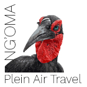 NGoma Travel logo